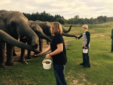 knysna-elephant-park